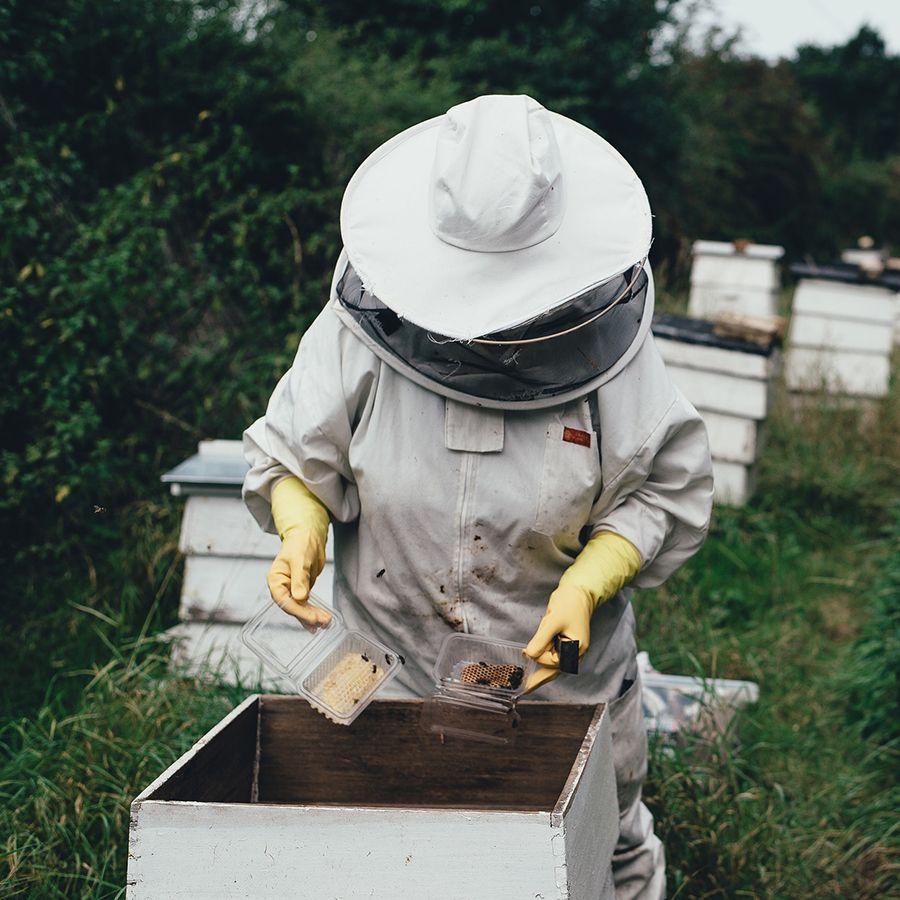 illustration d'un apiculteur en action