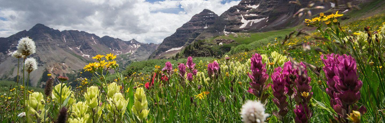 Fleurs en montagnes pour les abeilles et la production de miel